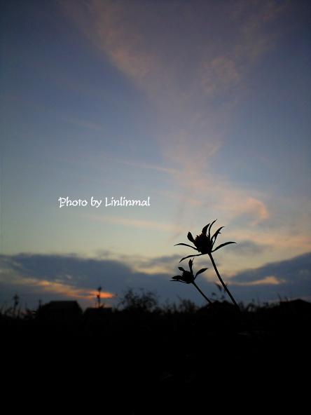 くっつき虫と夕空-1.jpg