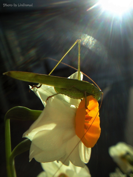 花とキリギリス-1.jpg