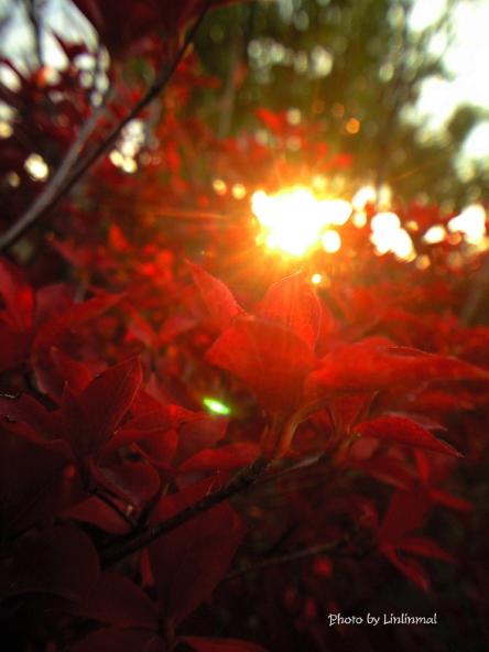 紅を照らす光-1.jpg
