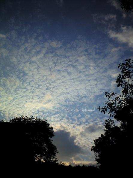 夕暮れ間近のうろこ雲-1.jpg