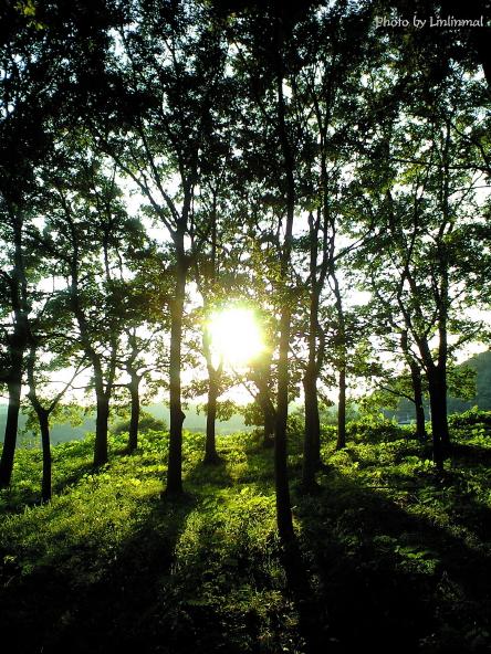林に射し込む夕日.jpg